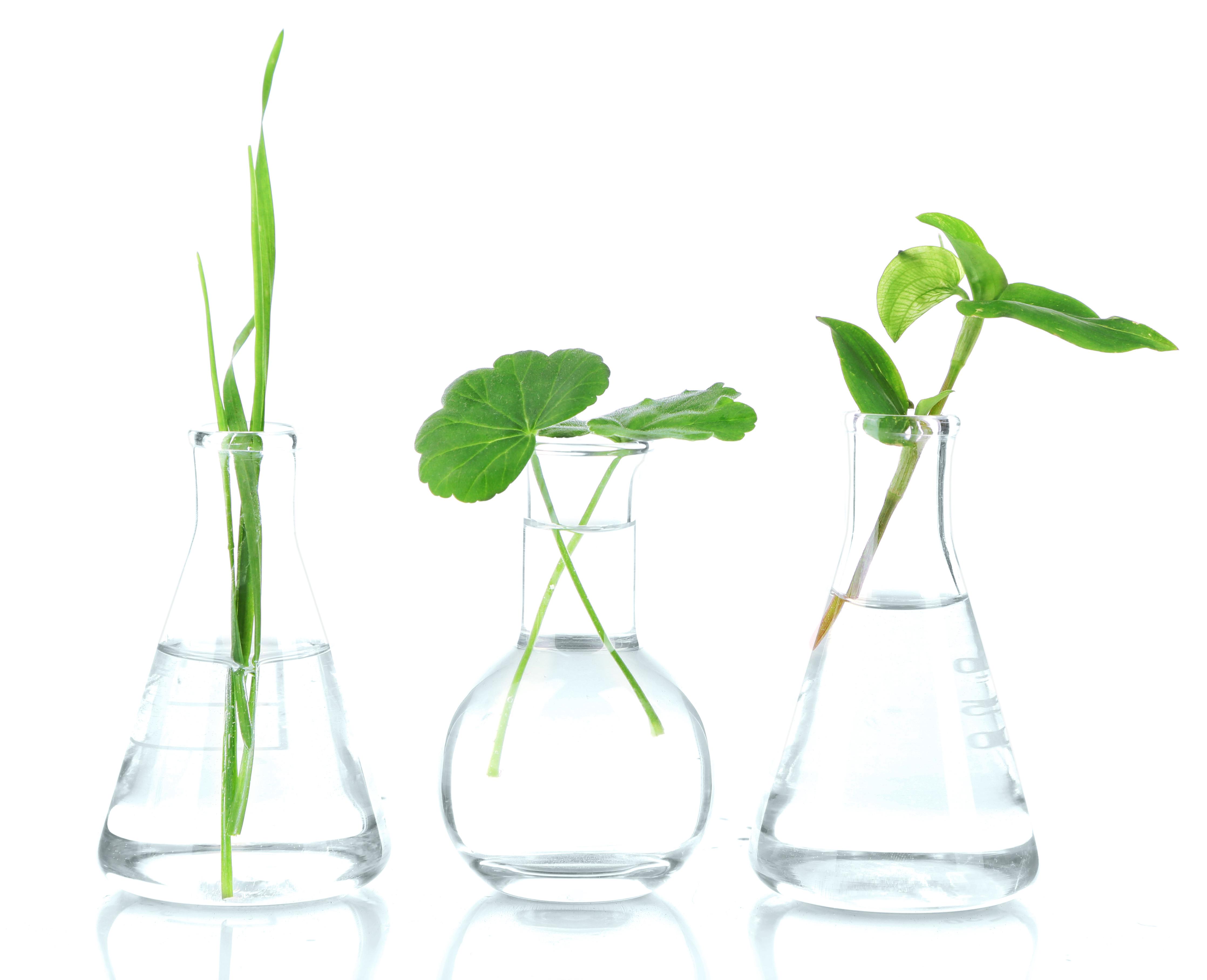 emerginc_scientific_leaves_glasses